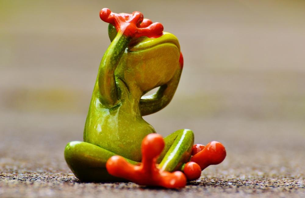 frog-1274766